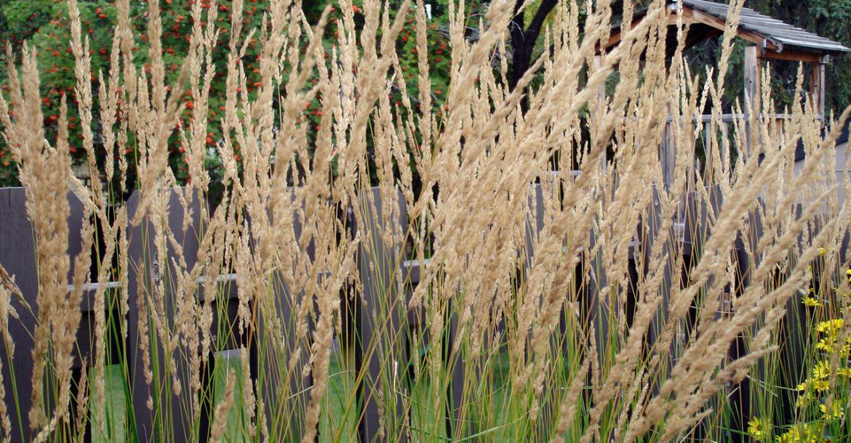 Perennials & grasses